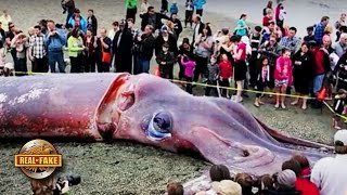 GIANT SQUID washes up on Beach Photo - real or fake?