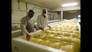 Wisconsin's Cheese Heritage