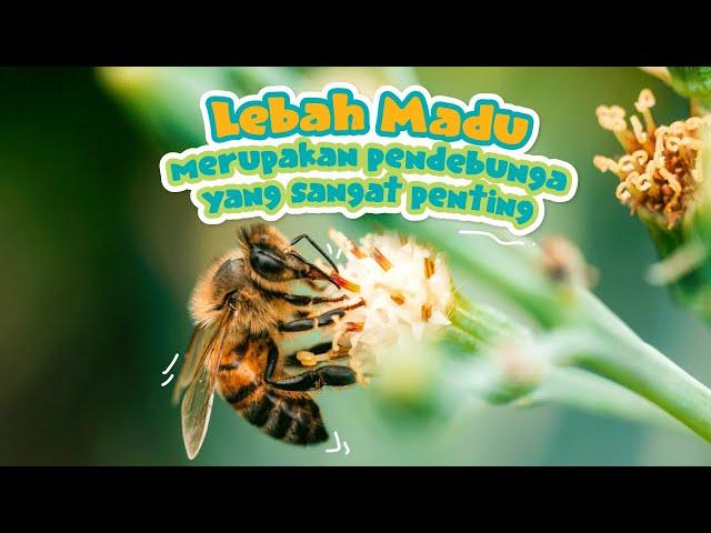 Tahukah Si Manja Eps 12 - Lebah Madu