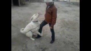 Что будет, если подставить собаке ногу?