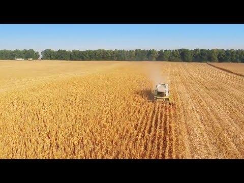 INTL FCStone - Grains & Oilseeds