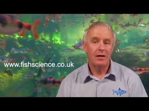 FishScience Insect Meal Fish Food