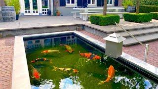 JUMBO KOI! 8000 & 7000 Gallon Ponds   Valuable Collection