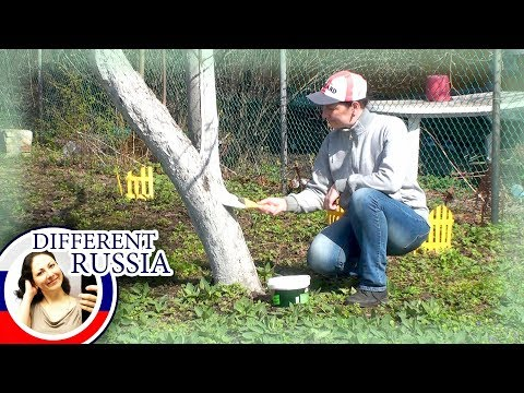 Why Russians Paint Trees In White Colors? Simple BBQ Stuffed Fish Recipe