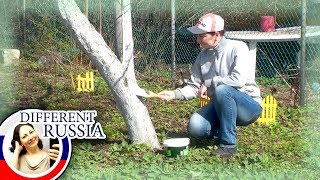 Weird Russia: Why Russians Paint Trees in White Colors? Simple BBQ Stuffed Fish Recipe thumbnail