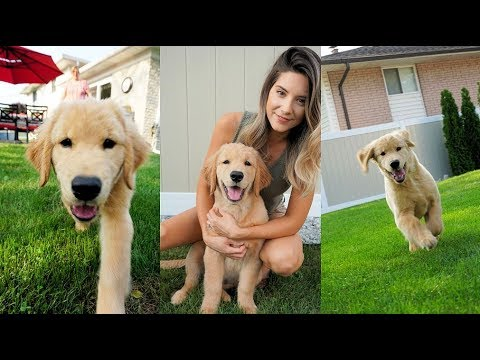 Tucker Goes to Grandma's House - Puppy Playdate