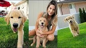 Tucker Goes to Grandma&#39s House - Puppy Playdate