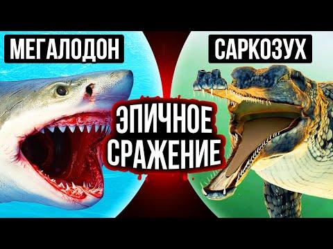 Мегалодон против гигантского доисторического крокодила: кто победит?