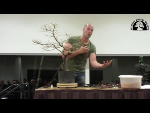 Midwest Bonsai Society - Guest Master visit Nov 9, 2015 - Mauro Stemberger