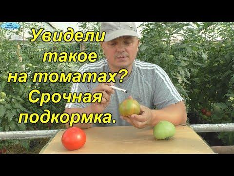 Увидели такое на плодах томатов? Срочно подкормите калием!
