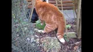 人間が猫のけんかの仲裁をしようとすると、このようなことになります(...