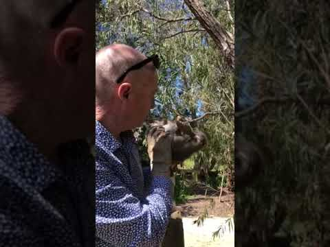 Possum Rescue By David Gray Raine & Horne McLaren Vale