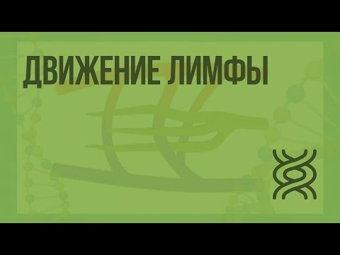 Движение лимфы. Видеоурок по биологии 8 класс