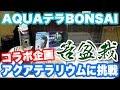 苔盆栽アクアテラリウム#1 盆栽アクアテラに挑戦!! 【AQUAテラBONSAI~コラ盆栽~】