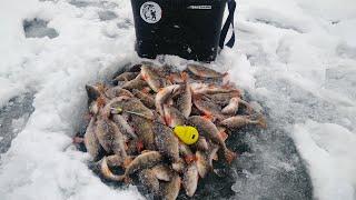 ПЕРВЫЙ ЛЁД 2020 2021 ЖОР ОКУНЯ ГОРБАЧ НА ГВОЗДЕШАРИК Зимняя рыбалка