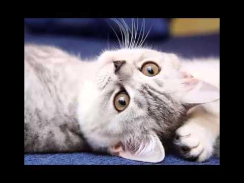 Вопрос: Как правильно наказать кошку?