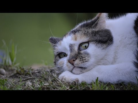 How to Avoid Feeding Your Cat Harmful People Foods - Method 2