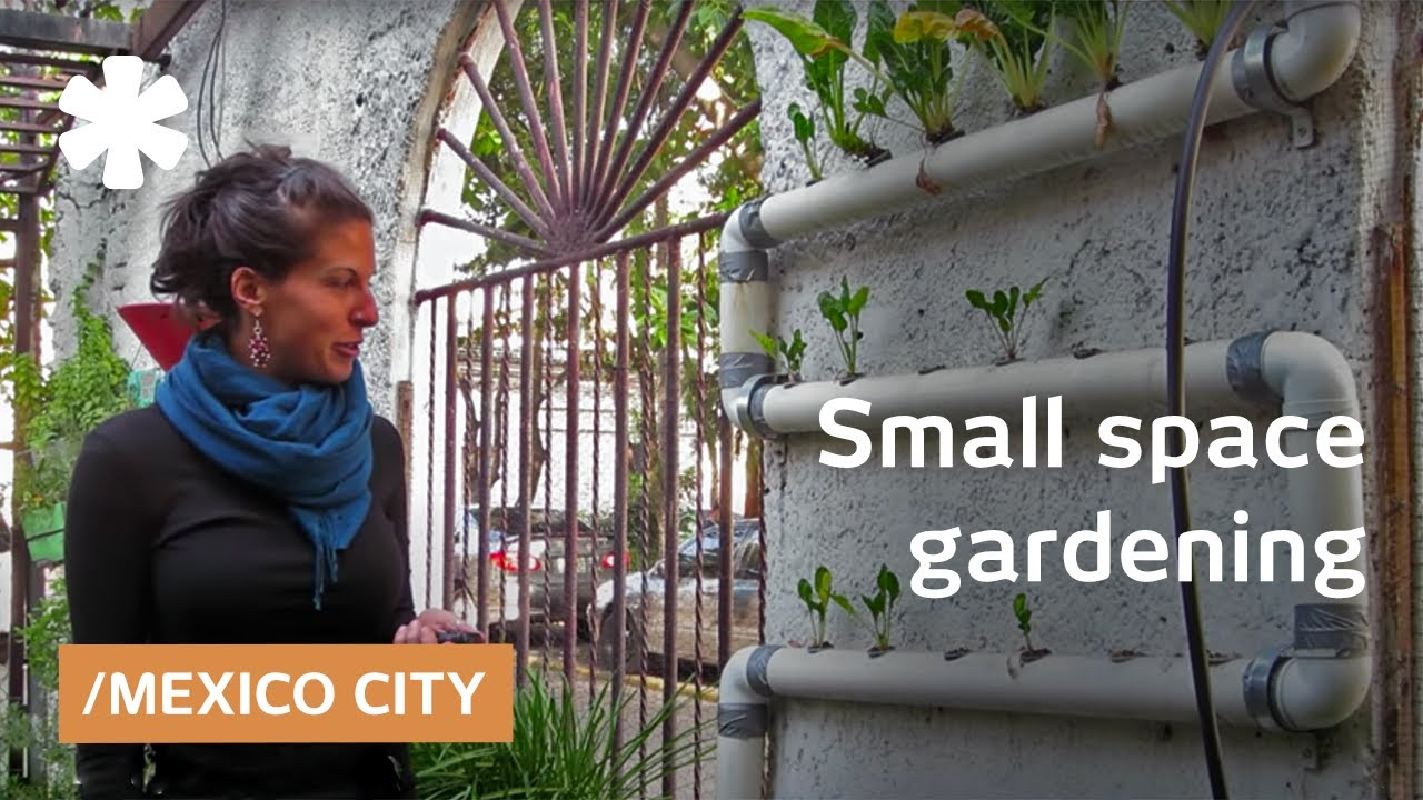 Experiments in small space gardening in Mexico City - YouTube
