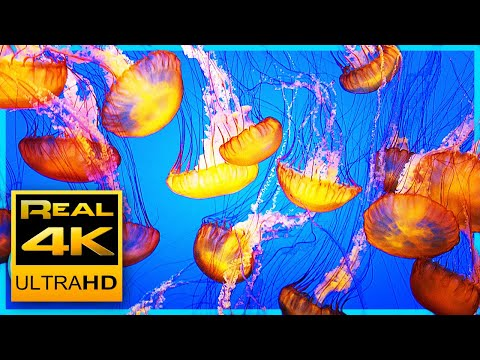 4K Soothing Jellyfish Aquarium for Relaxation - Sleep Relax Meditation Music 2 Hours UHD Screensaver