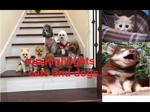 PODA DOG -  Instructions Become How To Top dogs baby and cats baby are innocent 2 | Top highlight