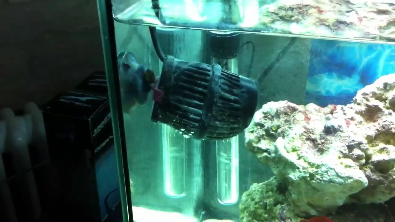 Acquario marino hd barriera corallina doovi for Pompette per acquari