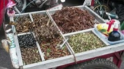 Everything you Need to Know About Eating Insects