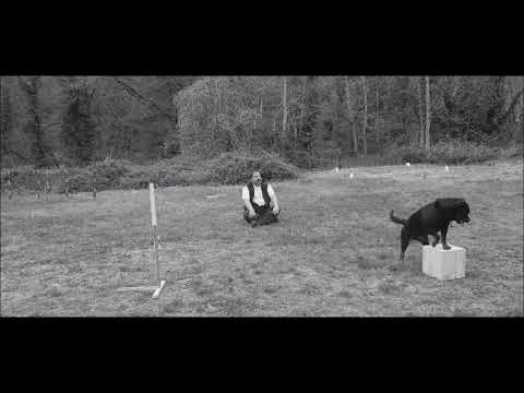 Dog dancing - Nex du clos Lenka (Rottweiler)