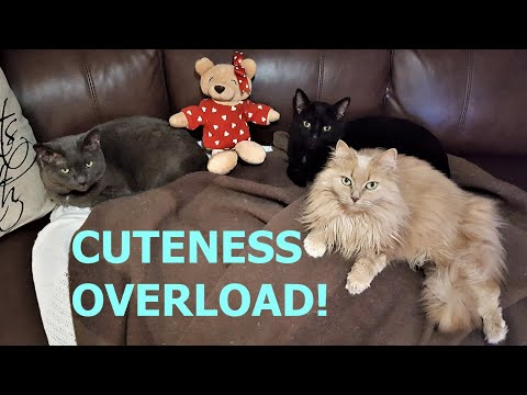 Cats showing Valentine's Day love from YouTube · Duration:  1 minutes 12 seconds