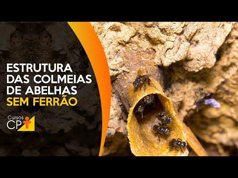 Clique e veja o vídeo Veja como as espécies de abelhas sem ferrão estruturam suas colmeias na natureza