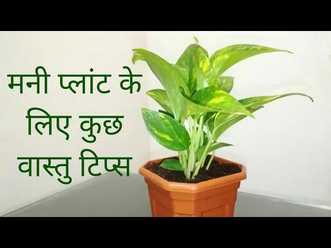 Money Plant Painting