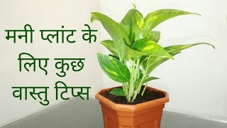 Vastu Tips for Money Plant to Attract Wealth in Hindi   Anupama Jha