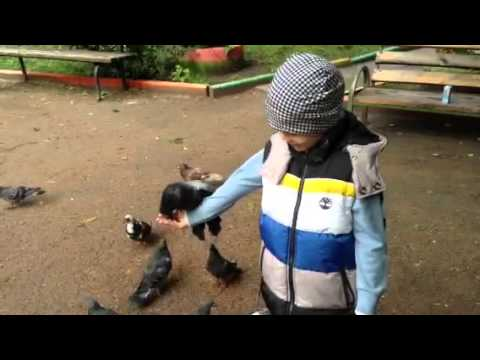 Арсений и голуби 2013