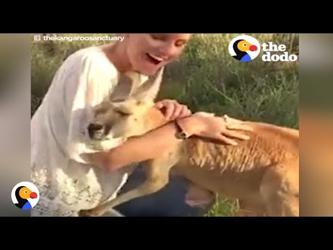 Kangaroo HUGS EVERYONE After Losing Her Family | The Dodo