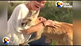 Kangaroo HUGS EVERYONE After Losing Her Family | The Dodo