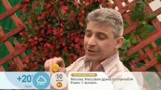 Алексей Бояджи.Полезные советы №4(Первый канал.Доброе утро)