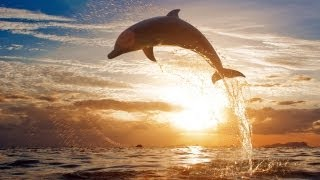 Beautiful Dolphins Chillout Lounge Mix Del Mar HD