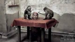Orujo de Brujas - Liberacion Animal