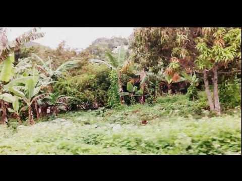 Weed & Reggae (Jamaica) UHF2 pro.2013