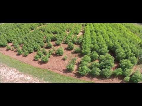 University of Mississippi cannabis garden, 2014