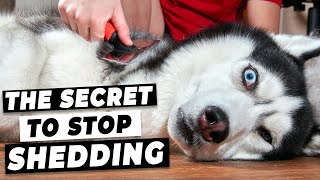 How To Stop Dog Shedding (Easy Tricks from A Vet)