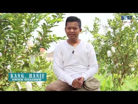 Inspirasi UKM Agrobisnis Bermodalkan Komitmen Dan Kejujuran : Nusagrow