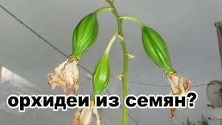 как вырастить орхидею из семян дома? как орхидеи размножать семенами?