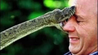 Первая помощь при укусах змей