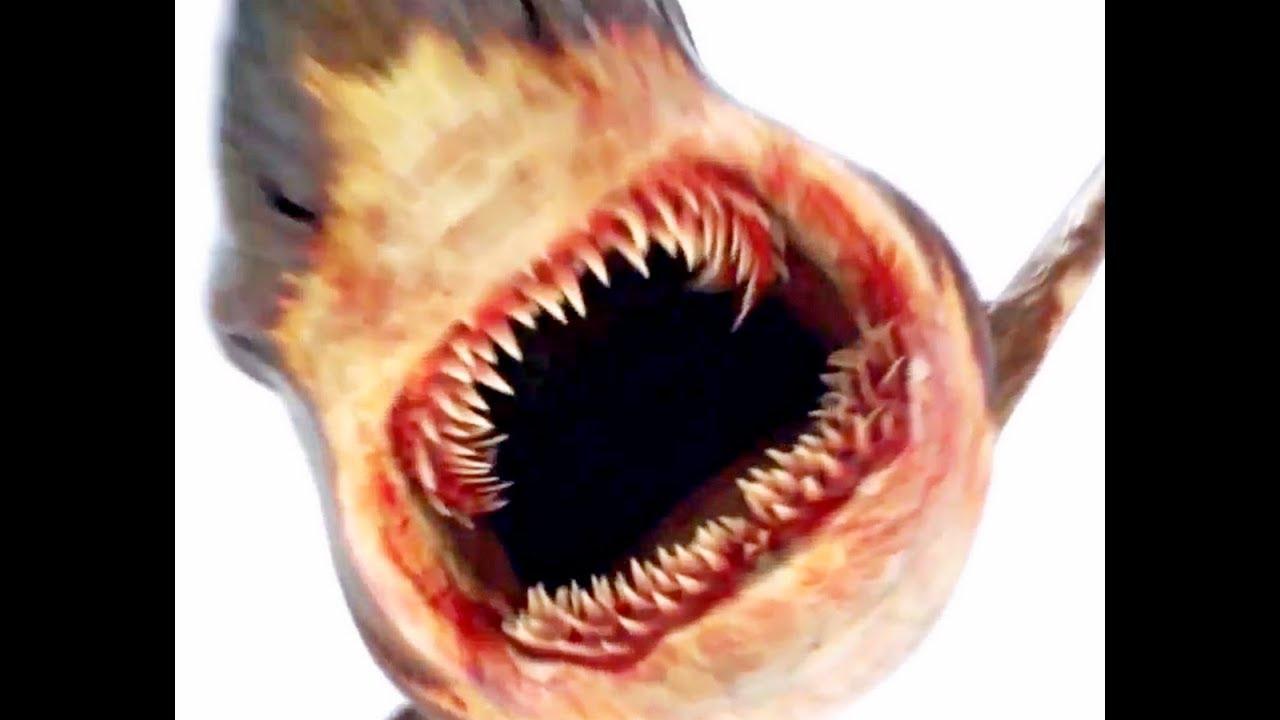 картинки атомная акула