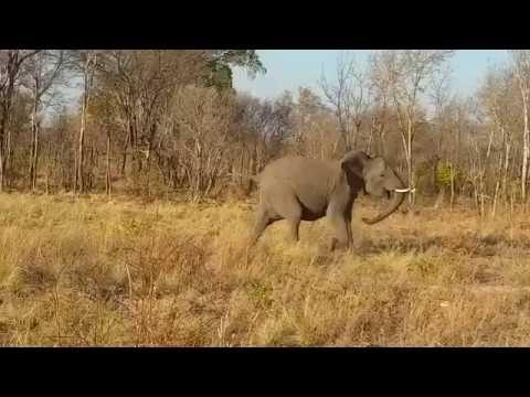 Elephant Roar Hwange National Park
