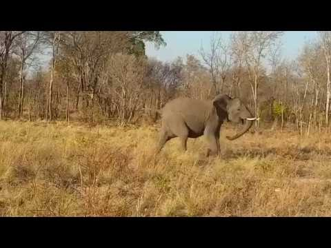 What Sound Does an Elephant Make? Learn the Elephant Vocabulary