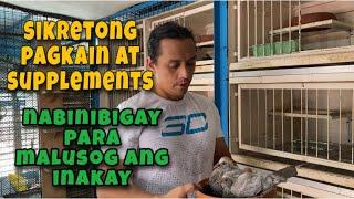 SIKRETONG PAGKAIN AT SUPPLEMENTS NA BINIBIGAY PARA MALUSOG ANG INAKAY |Reggie Cruz Loft & Aviary