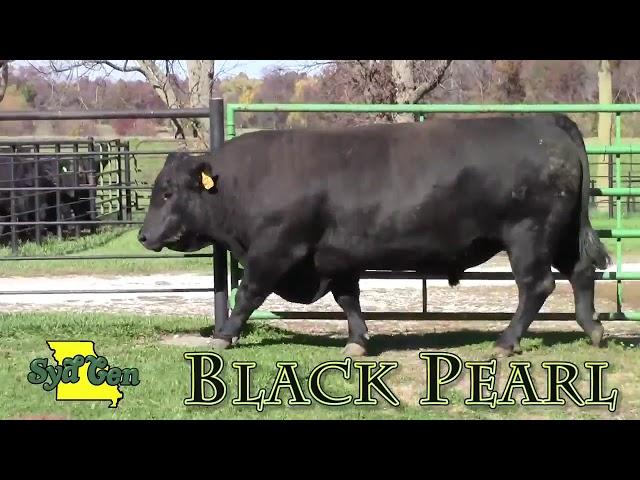 SydGen Black Pearl