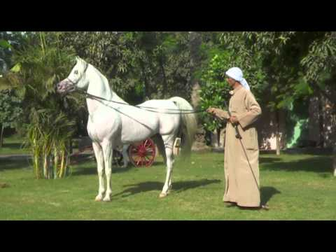 'Gamal Sakr'