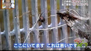 セアカゴケグモ生息調査 大阪府ペストコントロール協会会長の大洋防疫